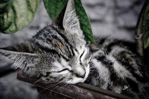 La Importancia del Sueño y 10 consejos para el buen dormir