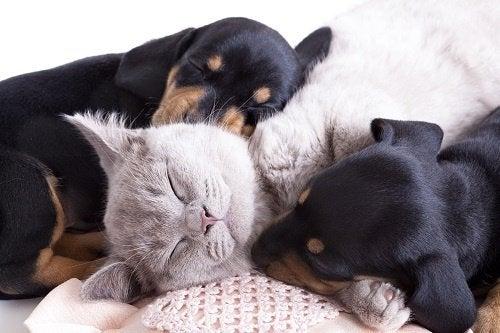 Mascotas: ¿Sabes por qué son tan buenas para la salud física y mental?