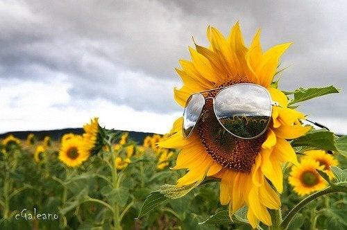 Encuentra un buen rato para tomar el sol