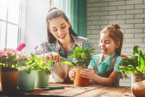 Resultado de imagen para decorar con plantas la casa personas