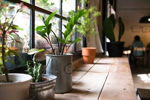 Beneficios de plantas en las casas.