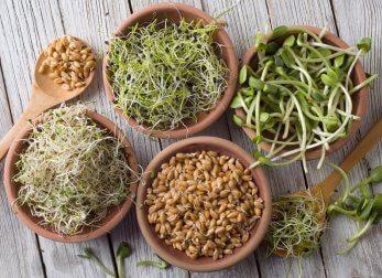 Semillas germinadas para cocinar.