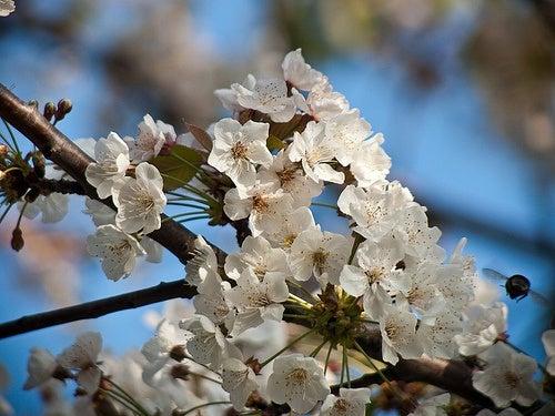 Beneficios de la miel de manuka para la piel