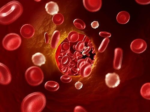 Circulacion de sangre