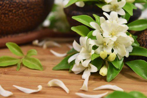 La flor de jazmín