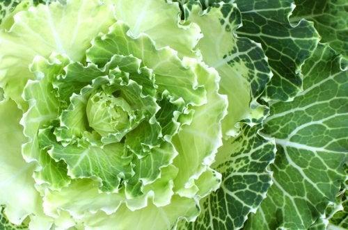 Beneficios y nutrientes de la col verde