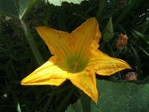 Algunas flores comestibles y sus nutrientes