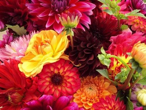 Los beneficios que aportan las flores: inspiradoras y aromatizantes