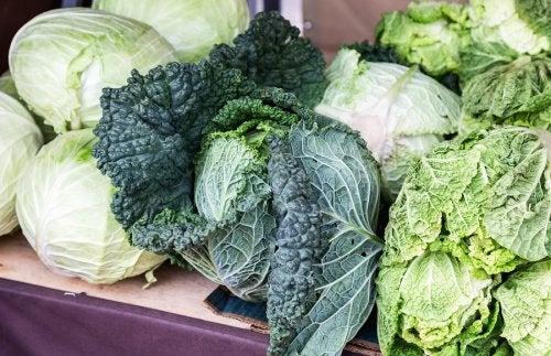 Variedades de col verde o kale.