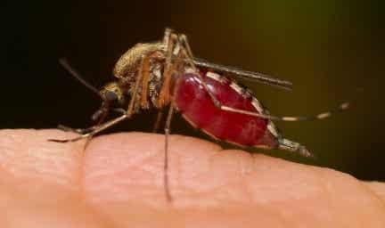 ¿Cómo evitar las picaduras de los mosquitos?