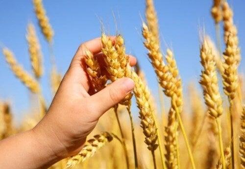 ¿Qué es la celiaquía? ¿Por qué los celíacos no pueden consumir gluten?