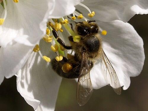 Abeja tomando polen de una flor
