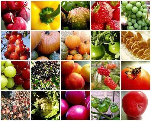 Veganos y vegetarianos, dos mundos distintos