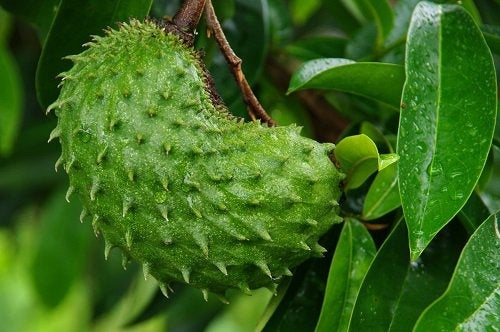 Image result for guanabana