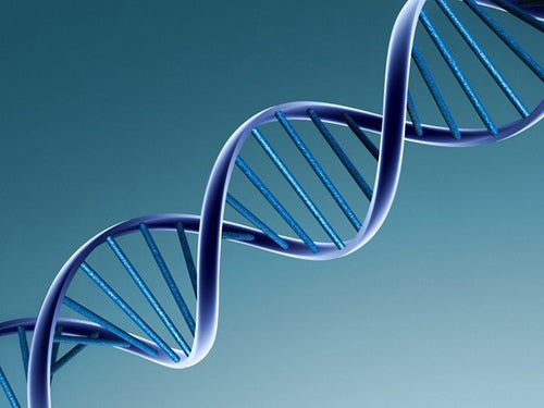 los virus cambian a partir de su ARN