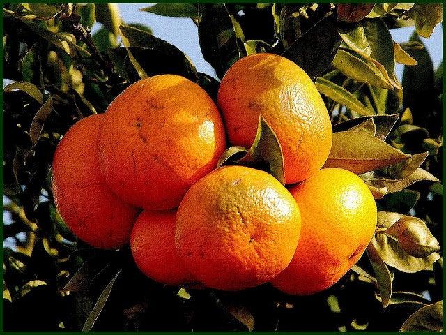 Los nuevos beneficios de la vitamina C