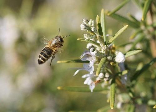 Pestaña abejas