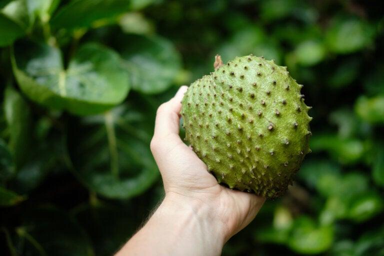 Beneficios de consumir guanábana, deliciosa fruta tropical