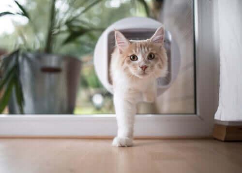 gato saliendo