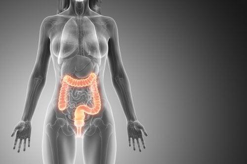 Limpieza de colon: lo que debes saber