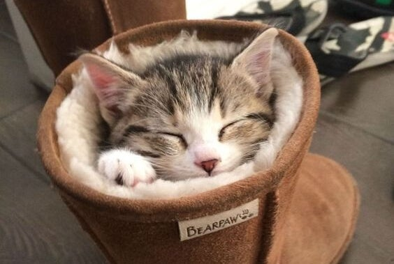 Gato durmiendo dentro de una bota