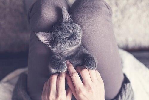 ¿Cómo los gatos nos pueden enseñar a dormir mejor?