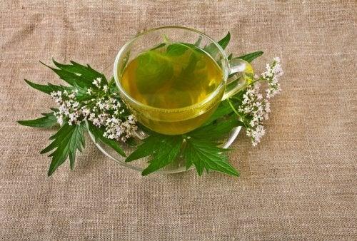 5 hierbas medicinales para tratar la depresión