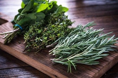 Propiedades medicinales de las plantas: ¿realidad o mito?