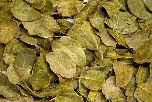 Flor de acacia para adelgazar
