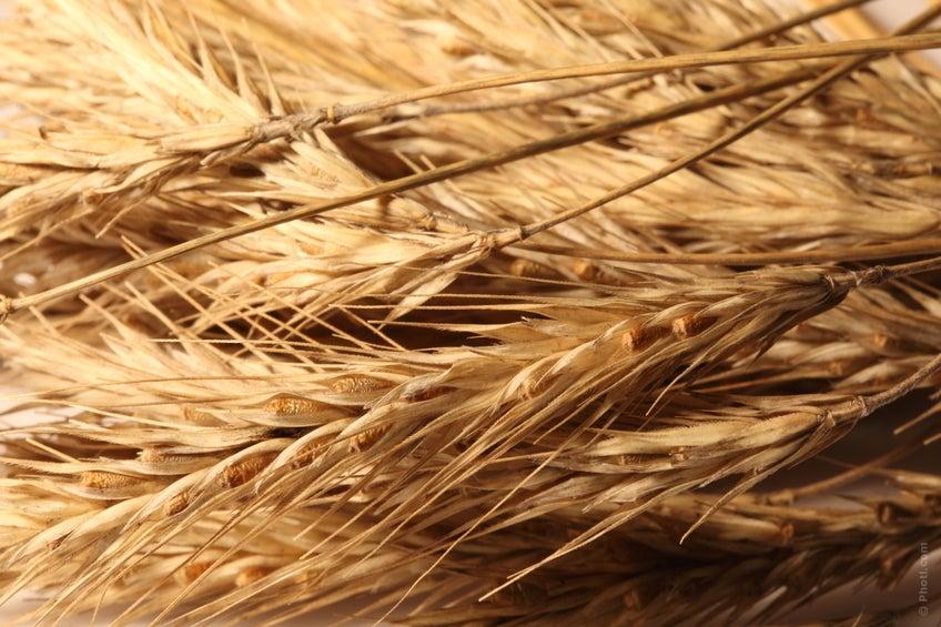 Los cereales integrales son otros de los alimentos más eficaces contra el estreñimiento.