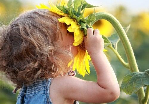 El aceite de girasol es un conjunto de grasas insaturadas, cardiosaludables y es una fuente abundante de vitamina E.