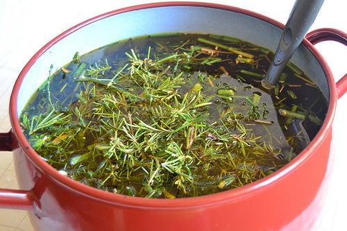 Hierbas-aromatica
