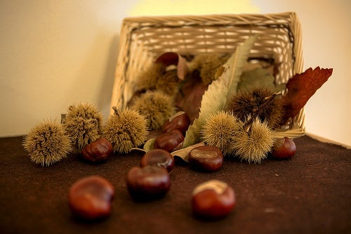 Las castañas, un fruto seco con gran valor nutricional