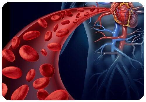 Arteria aorta y aneurisma