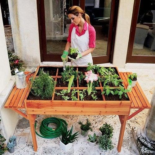¿Cómo armar una huerta orgánica en la ciudad?