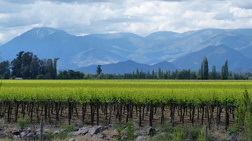 paisaje de viñedos Mariano