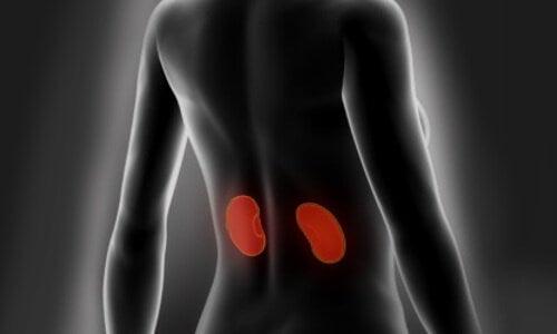 Consejos para limpiar y cuidar los riñones