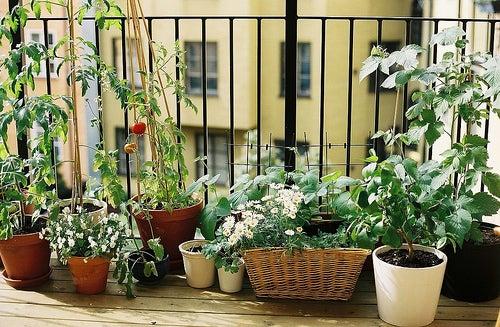 Sorprendentes beneficios de la jardinería para la salud