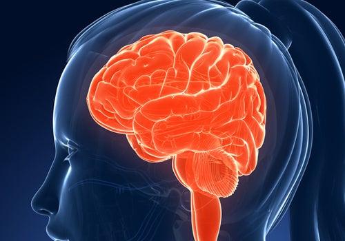 Alimentos que afectan nuestra memoria e inteligencia