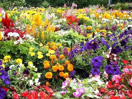 Son múltiples los beneficios de la jardinería.