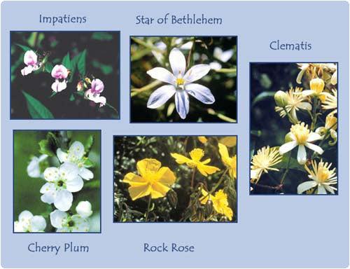 flores-componentes-del-remedio-rescate