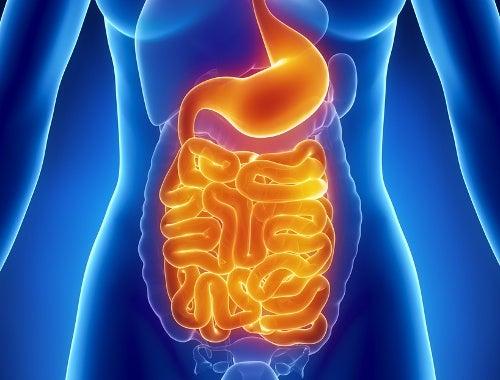 Imagen del sistema digestivo con flora intestinal