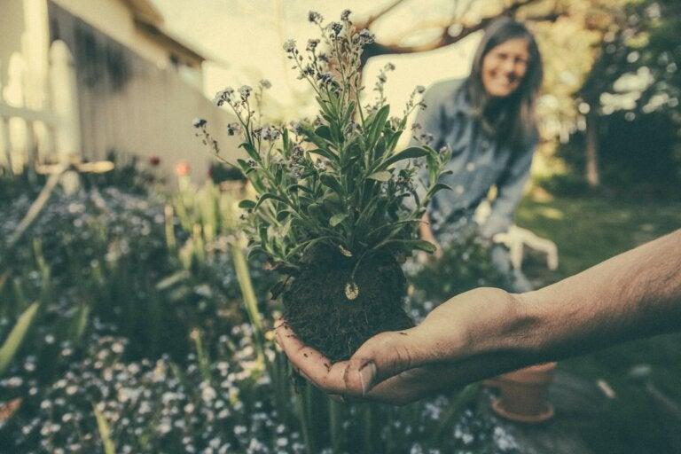 Beneficios de la jardinería para la salud