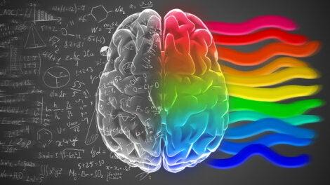 El cerebro y su función en el sueño.