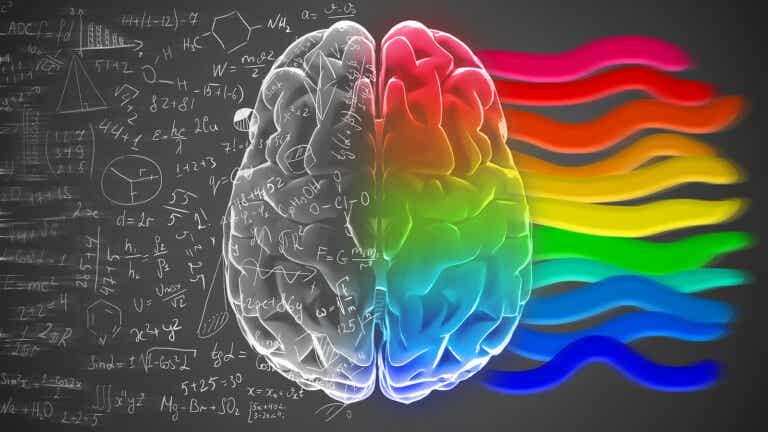 Hemisferios cerebrales y personalidad: ¿un mito?