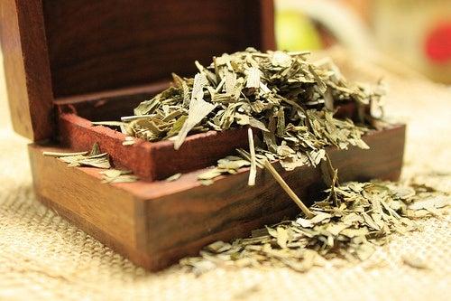 Ginkgo biloba, uno de los remedios para aliviar los zumbidos