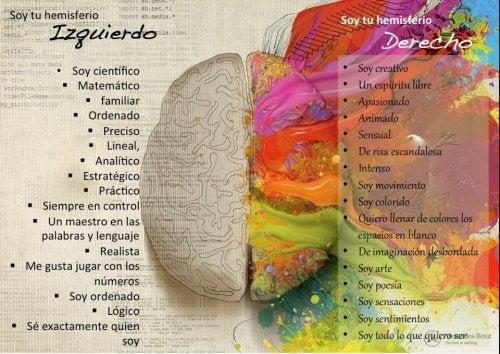 Hemisferios cerebrales y personalidad, ¿mito o realidad?