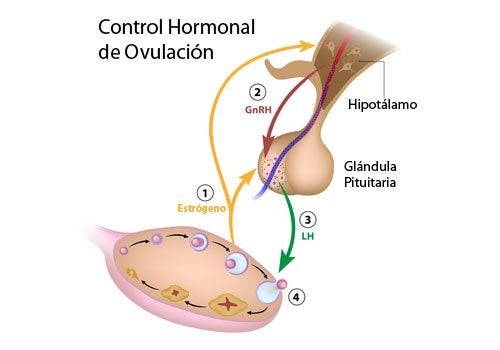 5 alimentos que son reguladores hormonales naturales