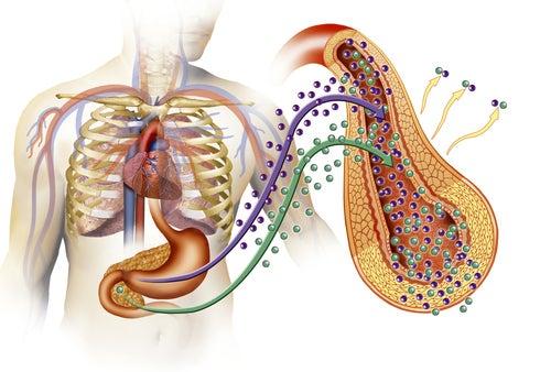 diabetes en el cuerpo humano