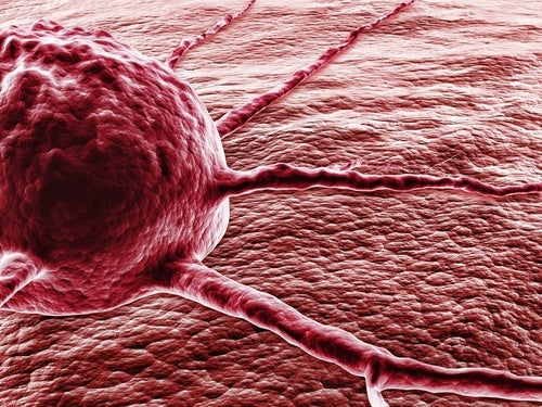 Aji picante contra el cáncer: el milagro de la capsaicina